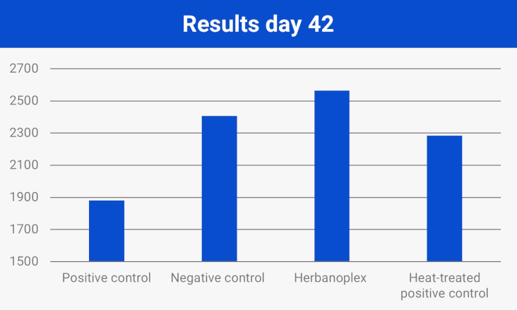 Results day 42